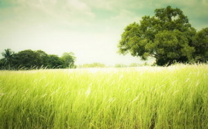 field-of-grass-336x210-1205047